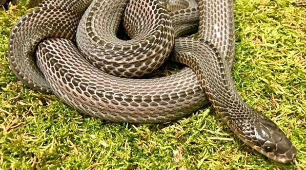 The 3 Fastest Snakes In The World