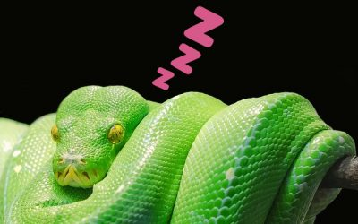 Are snakes nocturnal