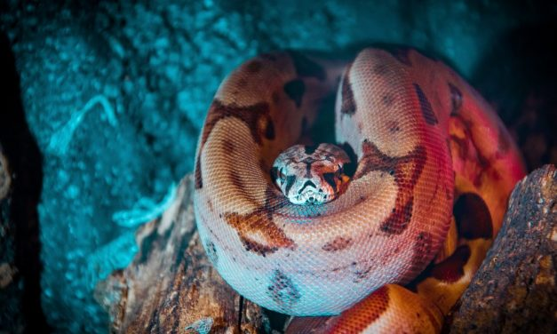 Everything About Snake Teeth