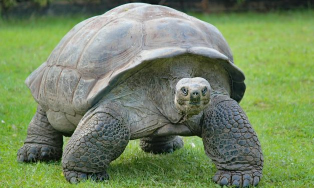 Tortoise As A Pet? Everything You Need To Know