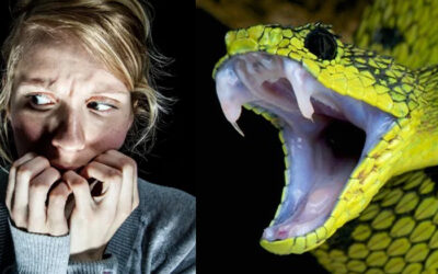 why Are People Scared Of Snakes?