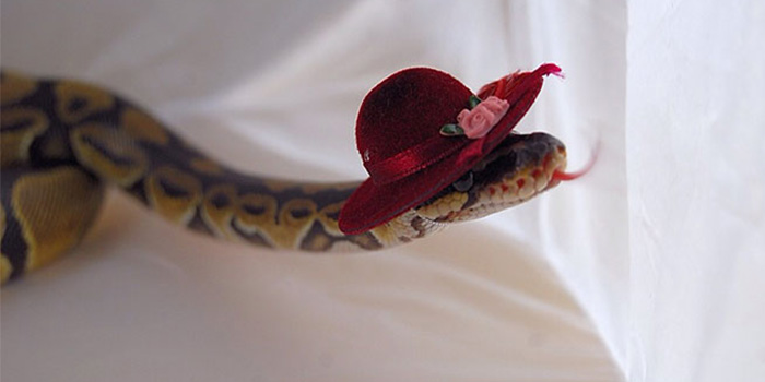 Funny Snake With Hat